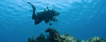 Scuba Diving tour (Learn to Dive at Las Caletas)